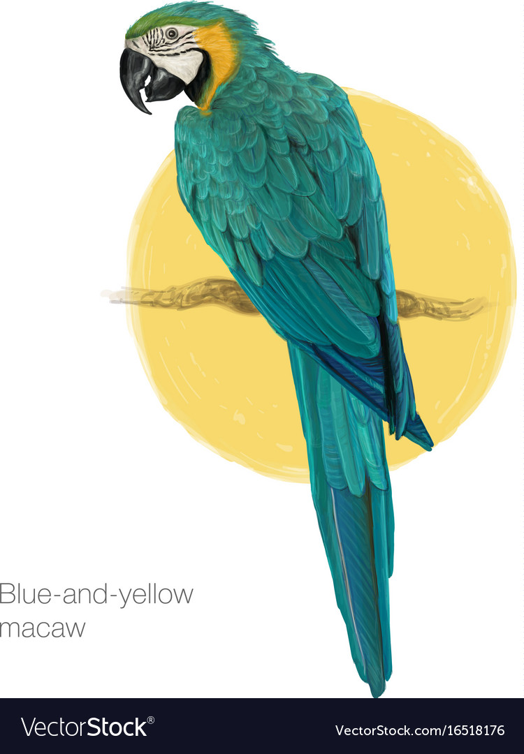Blue-and-yellow macaw hand drawn painting
