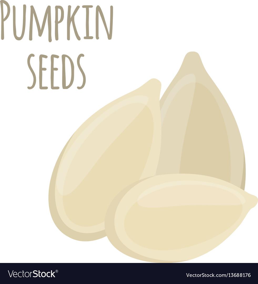 Pumpkin seeds vegetarian organic food nutrition vector image