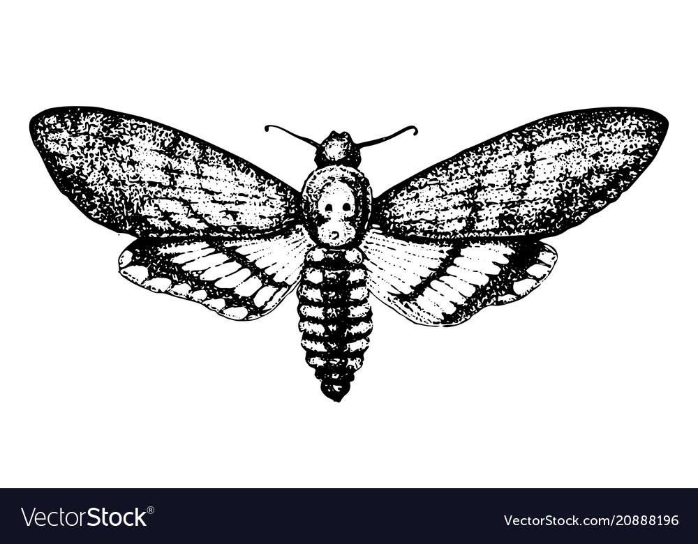 Butterfly or wild moth insect mystical