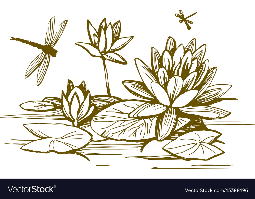 Flowers of water lilies vector image
