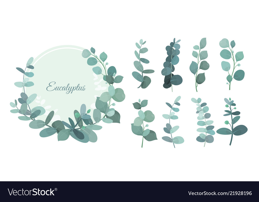 Set of eucalyptus leafs and
