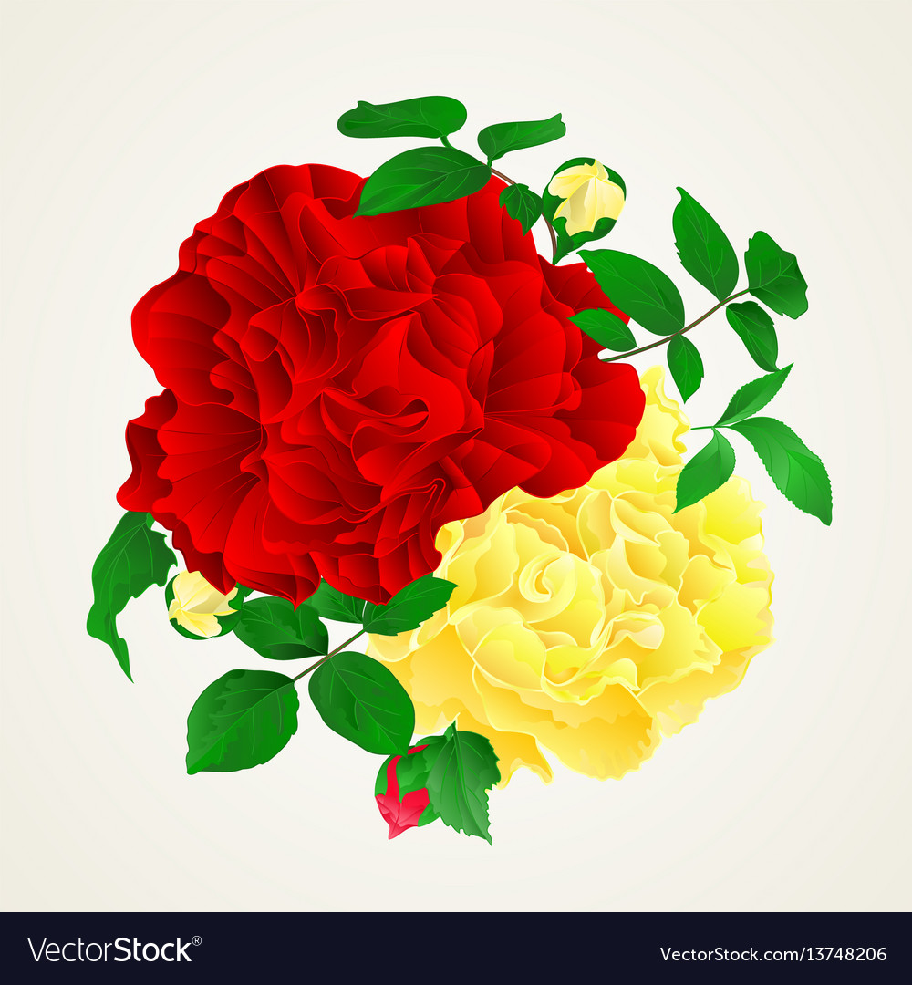 Red and yellow rose with buds and leaves vintage