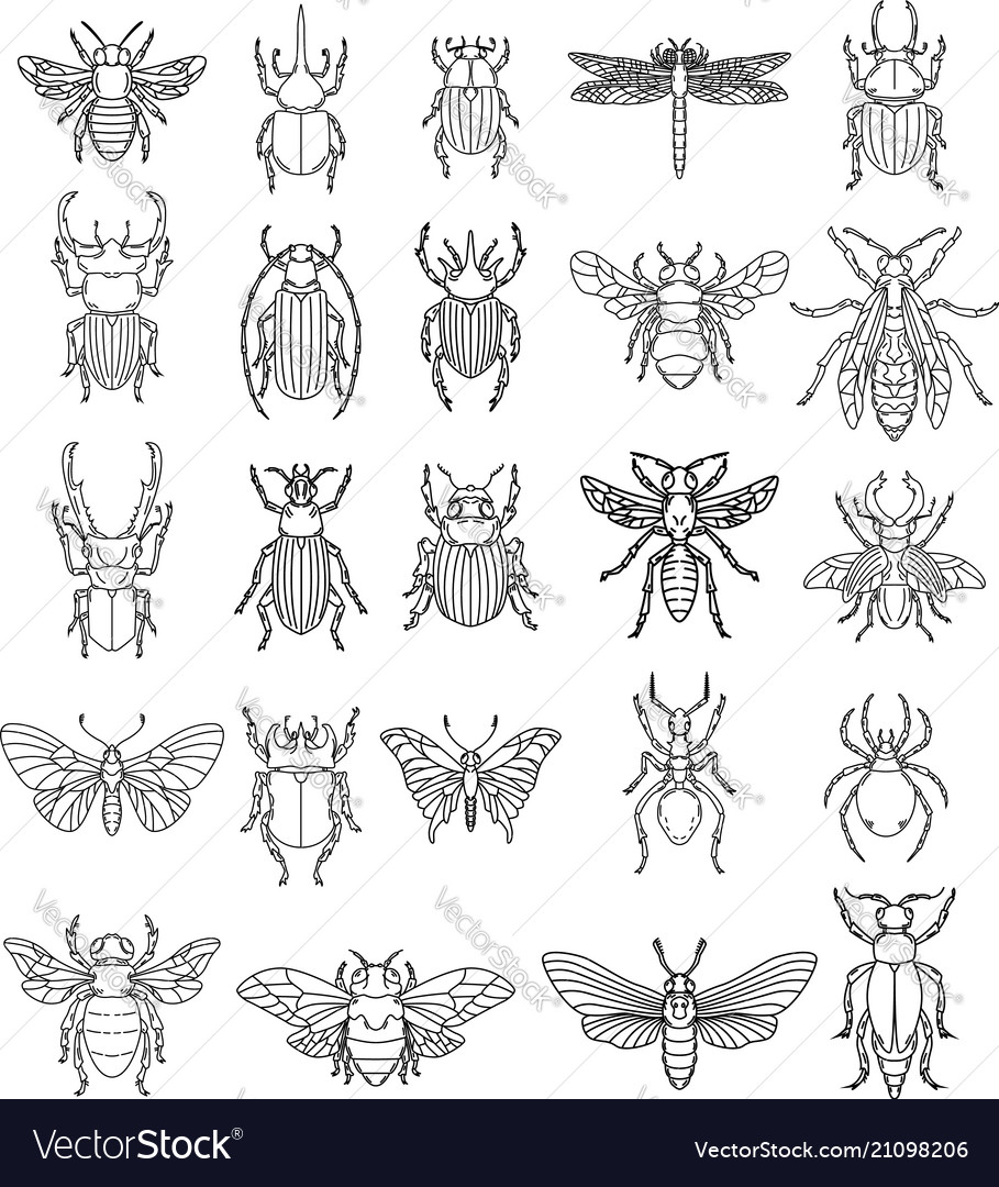 Set insects on white background design
