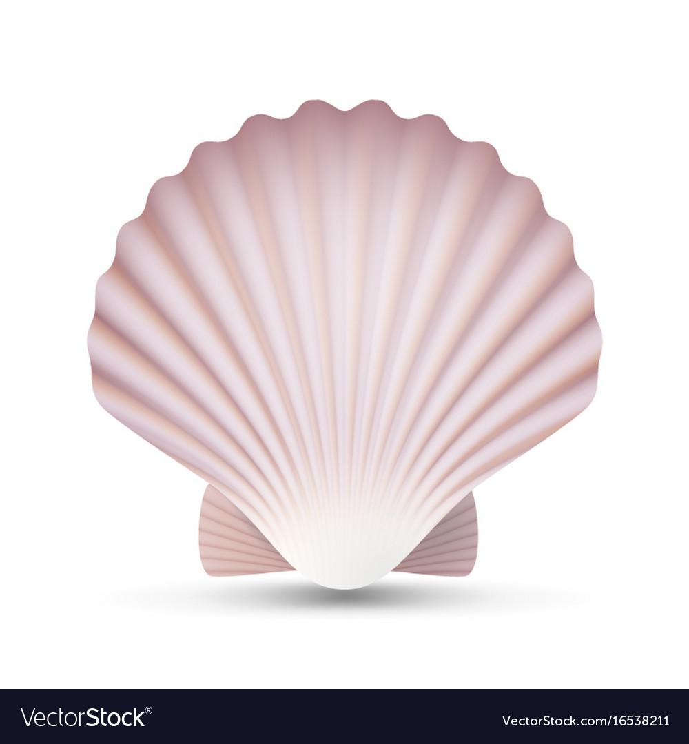 Scallop Seashell Ocean Mollusk Sea Shell Vector Image