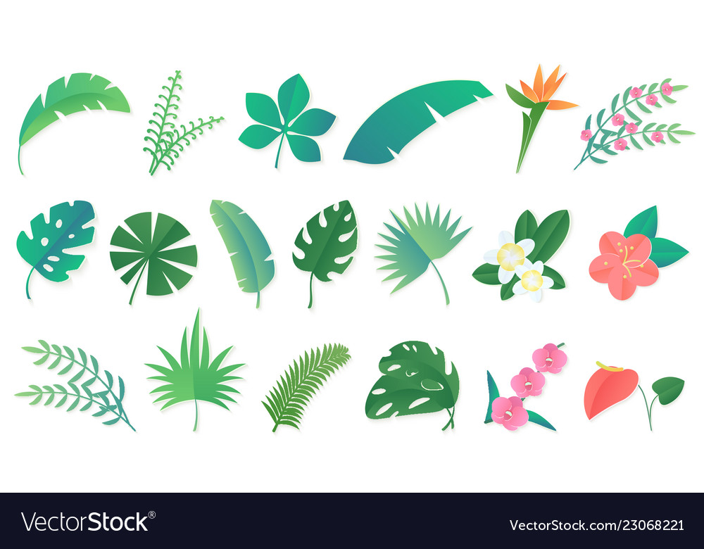 Set cartoon tropical rainforest leaves