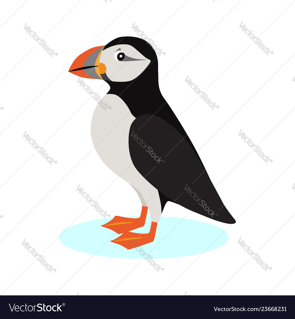 Atlantic puffin icon polar bird with colorful
