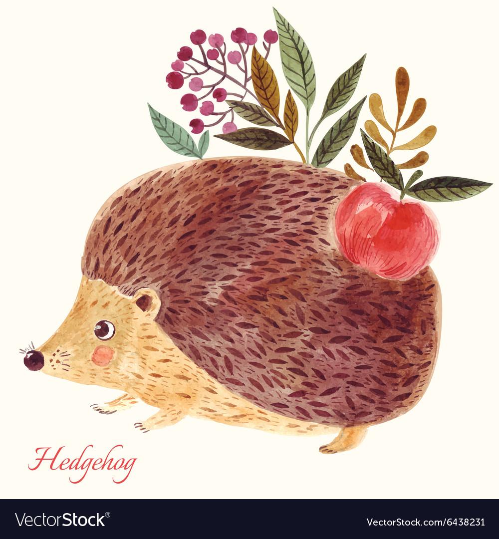 Hedgehog in watercolor technique