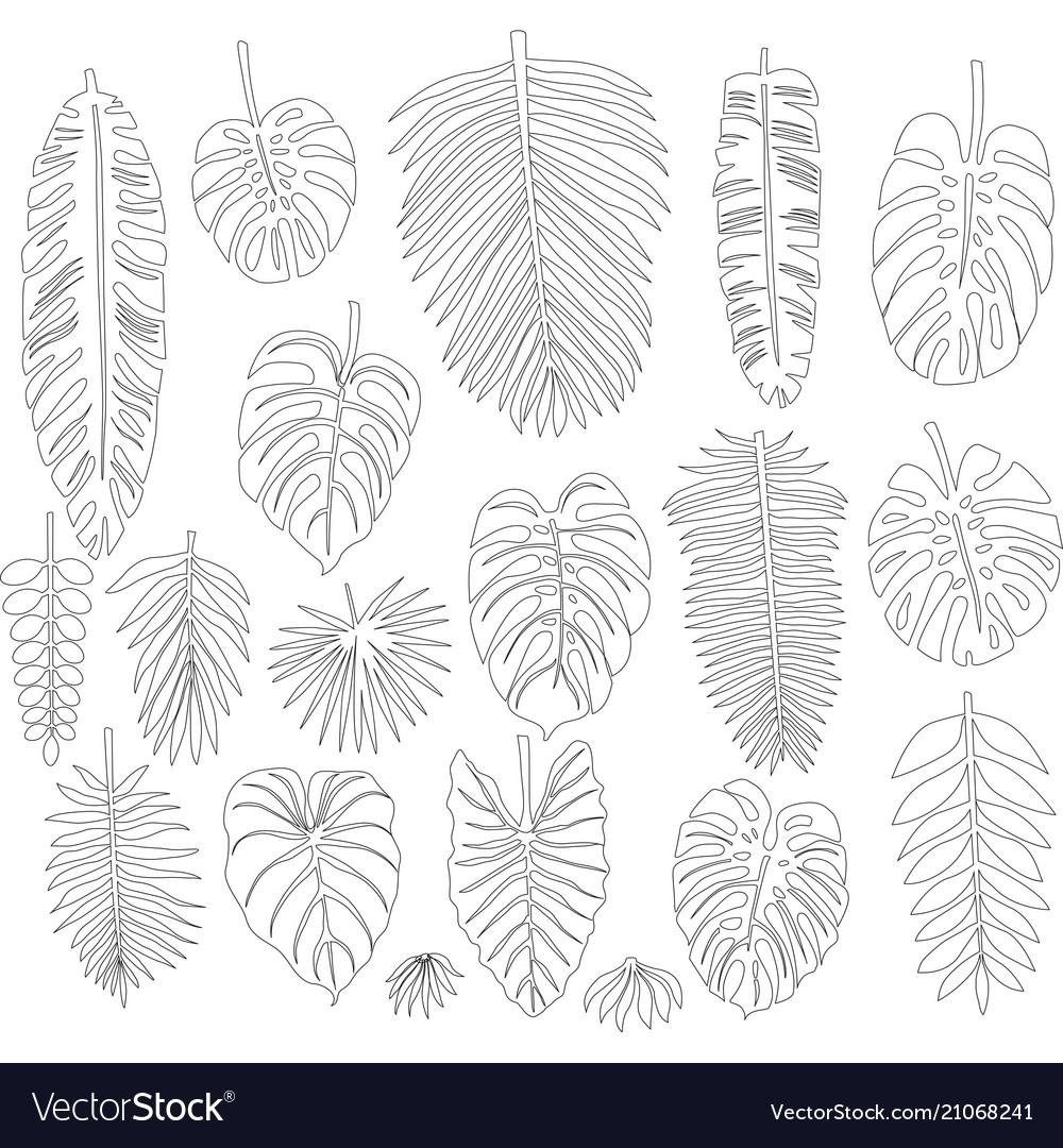 Set of leaves in the contour style of tropical vector image
