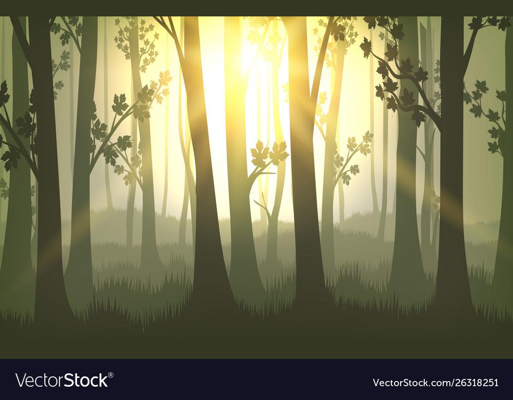 Tree trunks sunset background