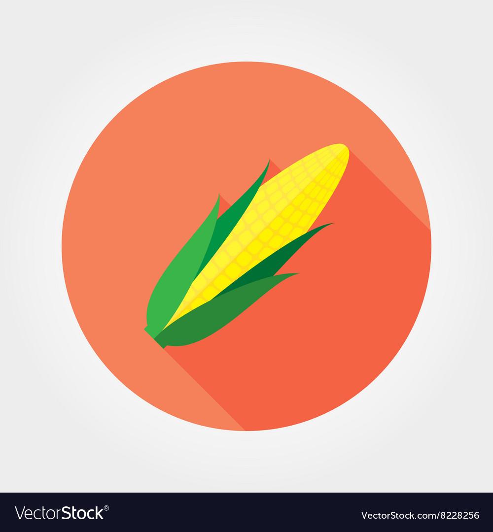 Corn Flat icon vector image