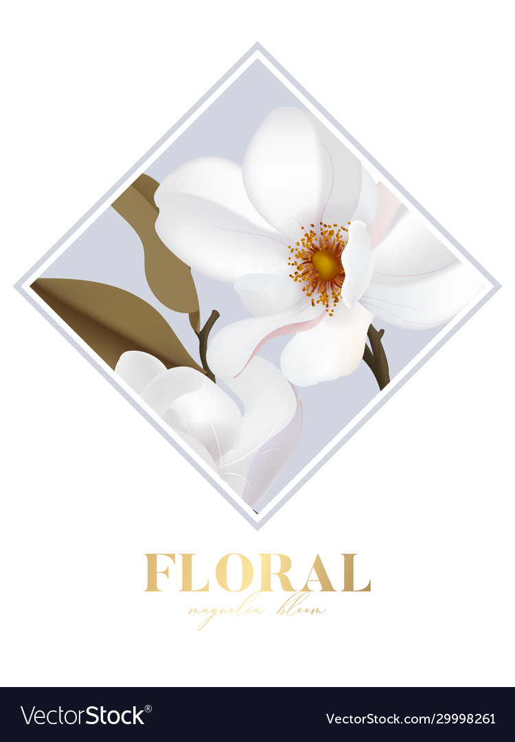 Magnolia white isolated flower in rectangle frame