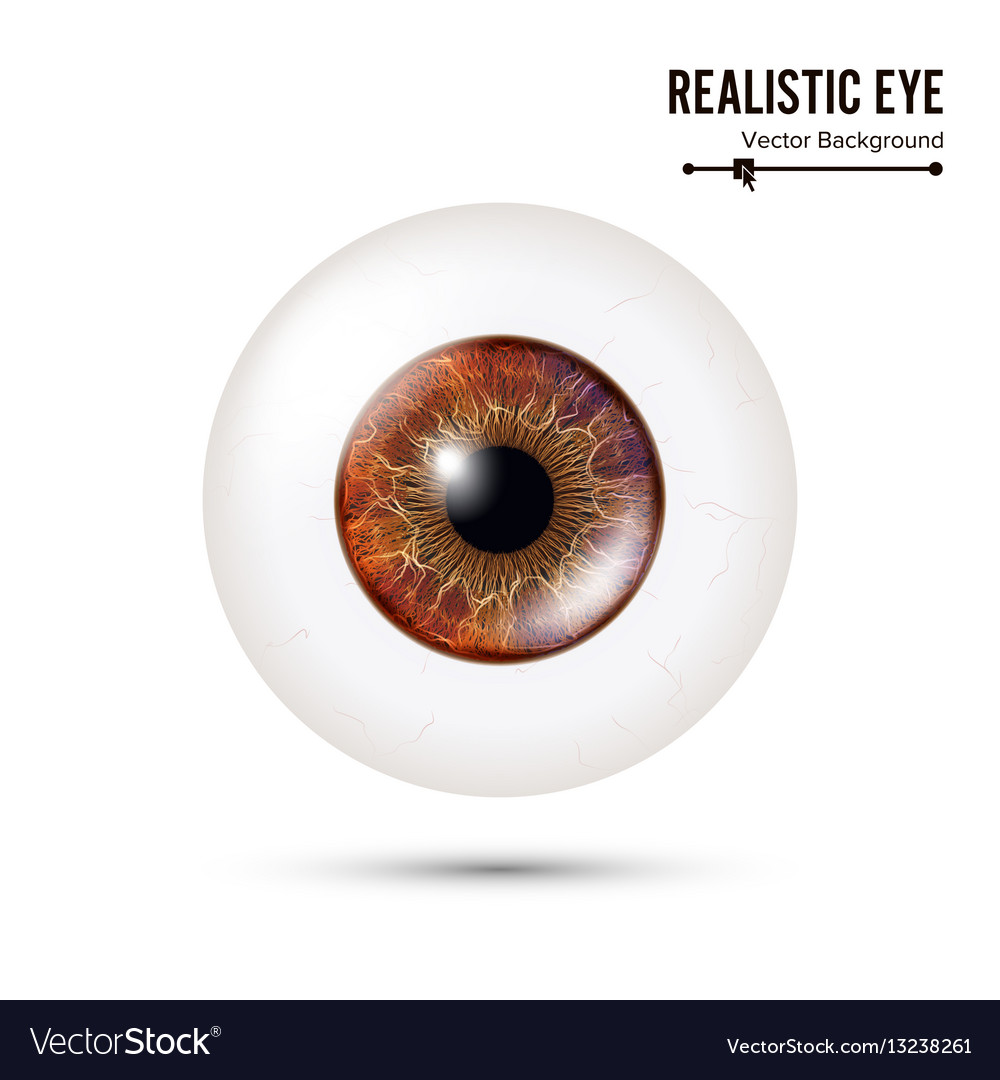 Realistic detailed human eyeball vector image