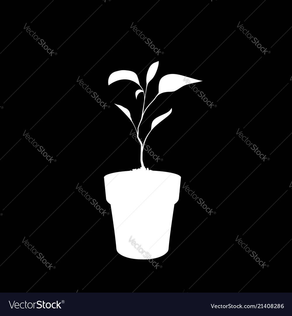 White silhouette of sprouting plant in the pot