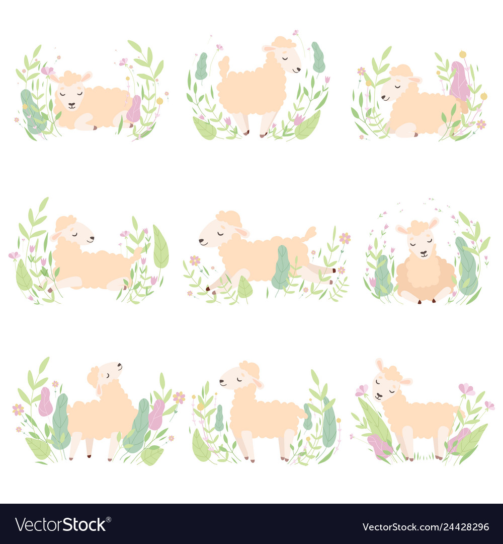 Collection adorable little lambs on beautiful