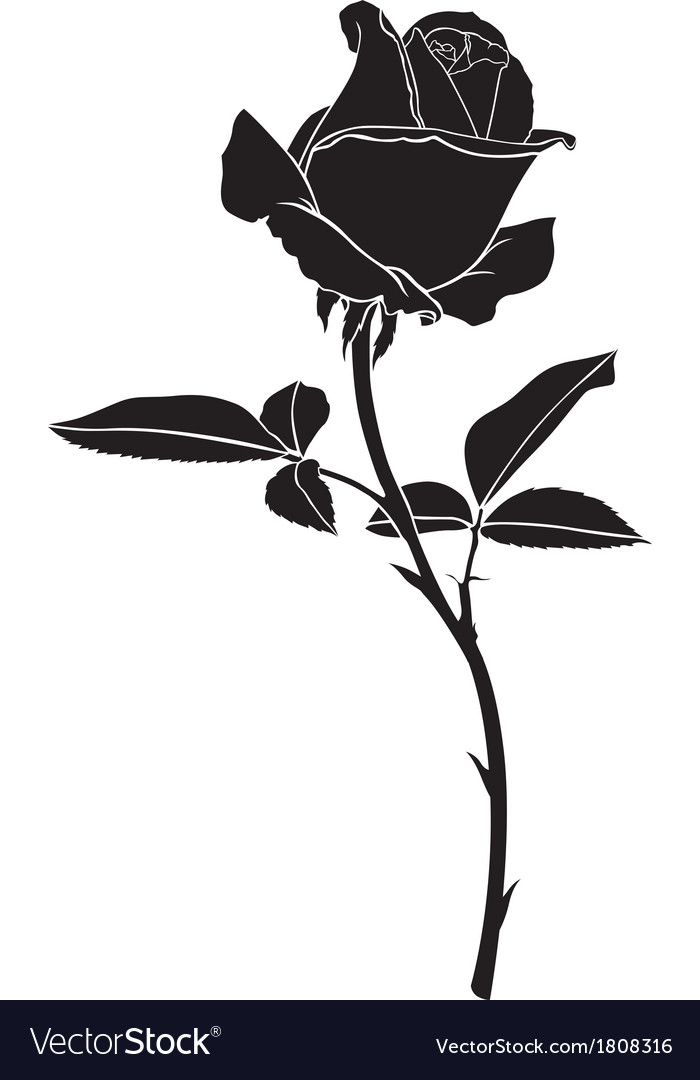 Roses silhouette vector image