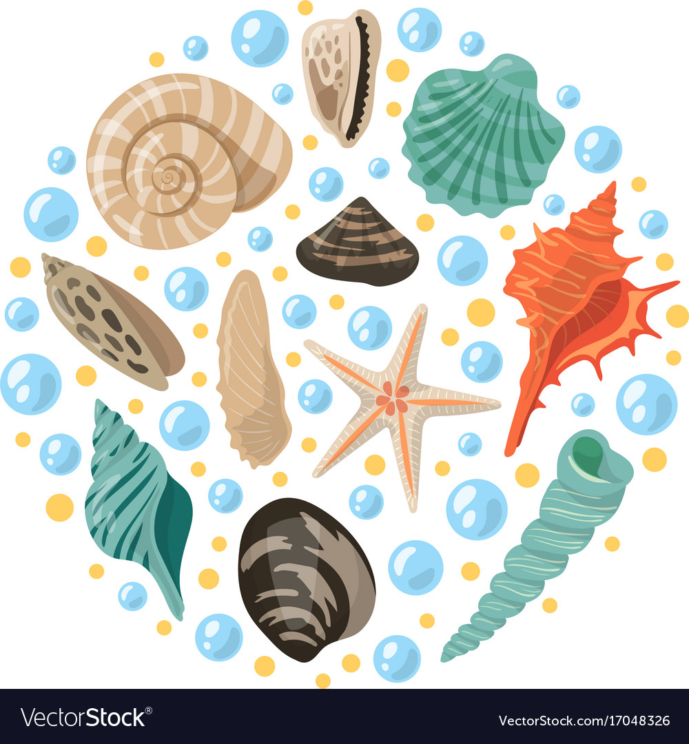 Different tropical shells in circle shape