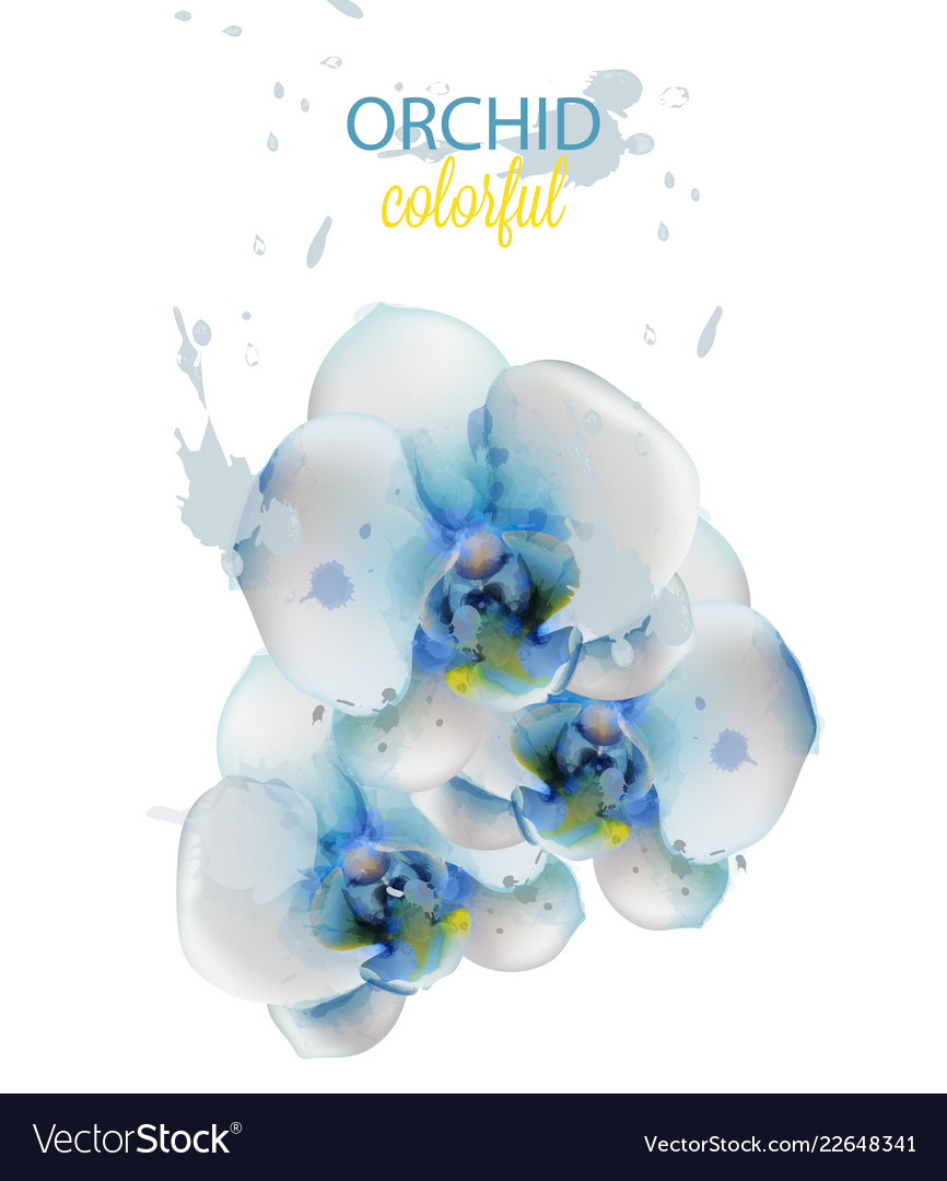 Blue orchid flowers watercolor isolated