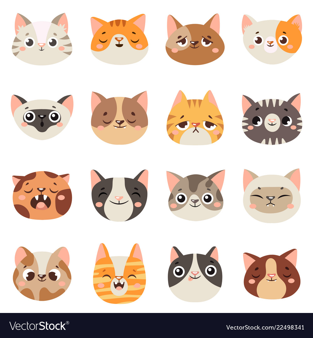 Cute cats faces happy animals funny kitten