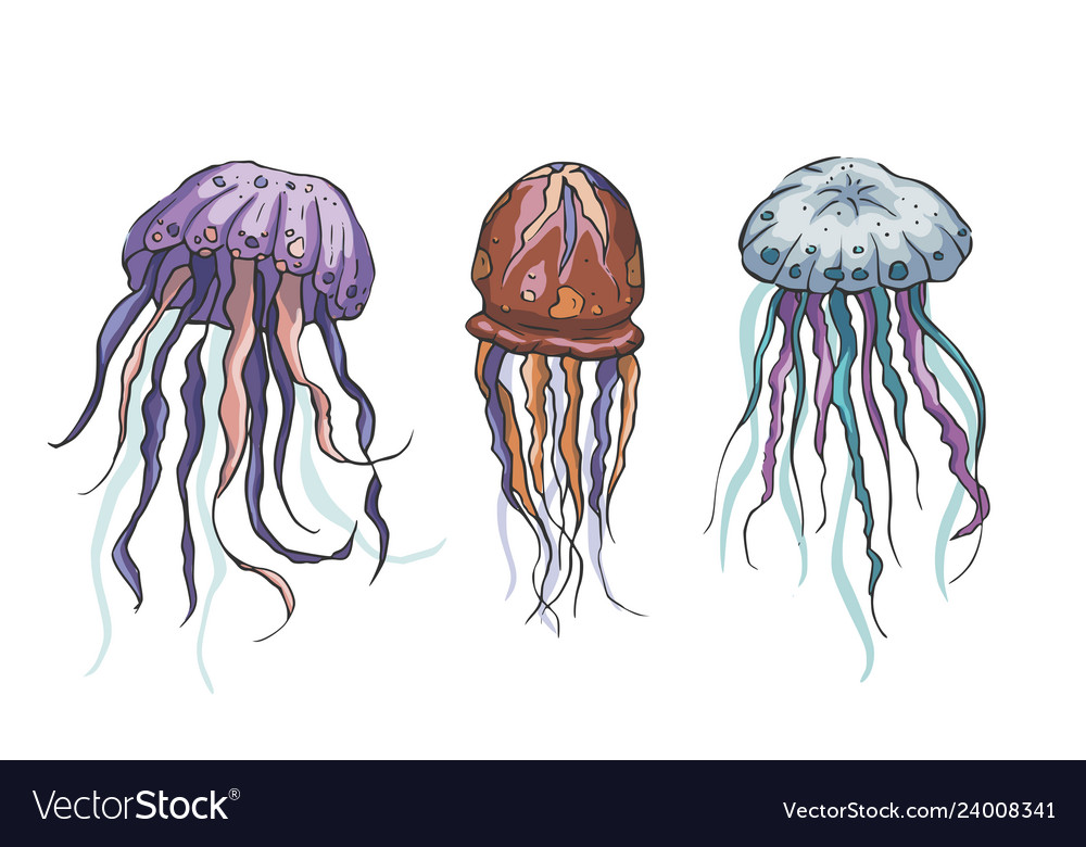 Jelly fish set