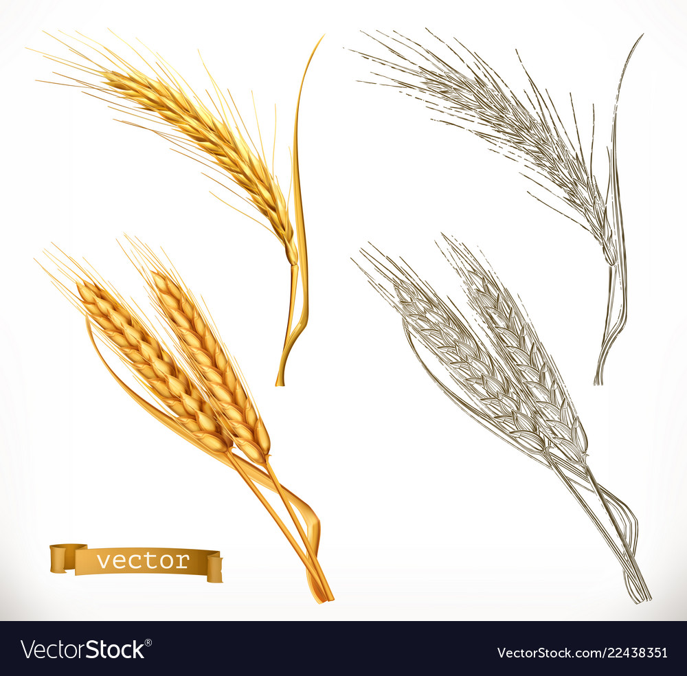 Ears of wheat 3d realism and engraving styles
