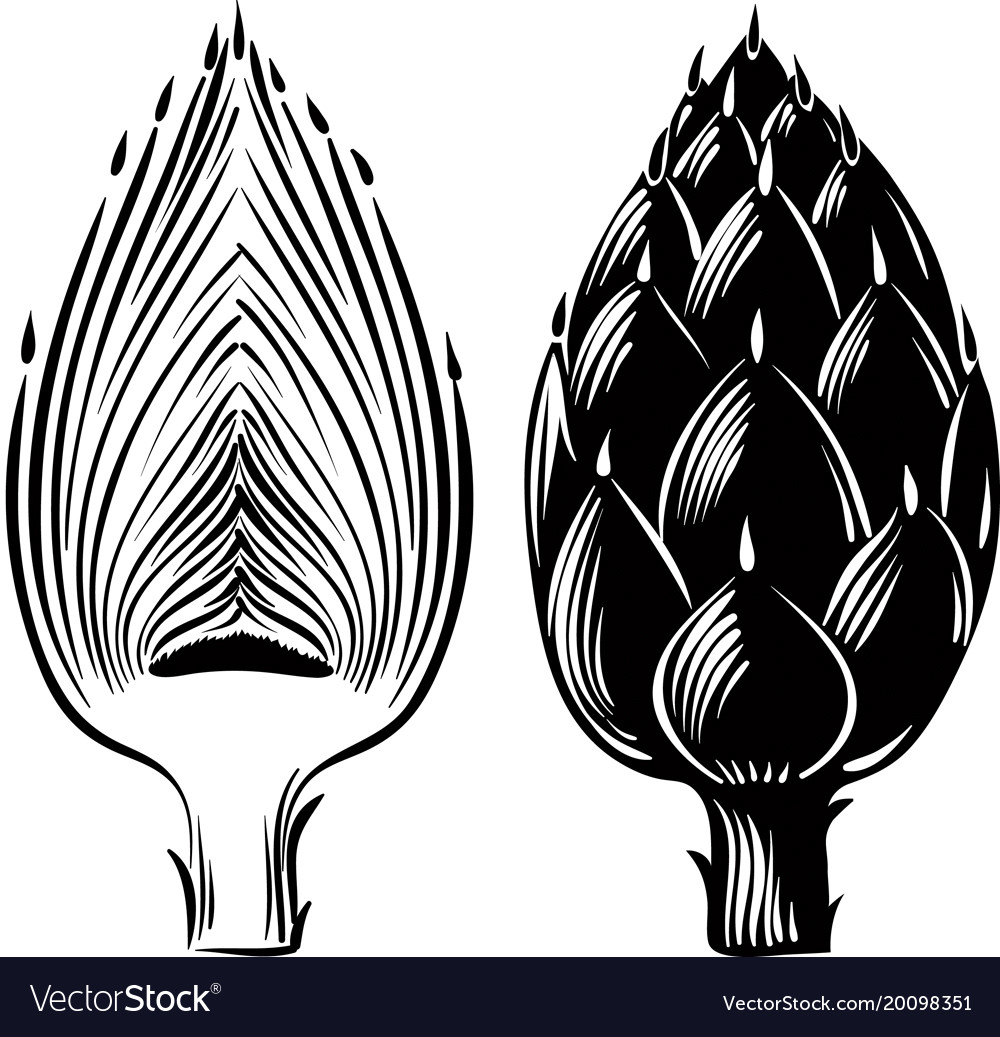 raw artichokes one cut in half royalty free vector image