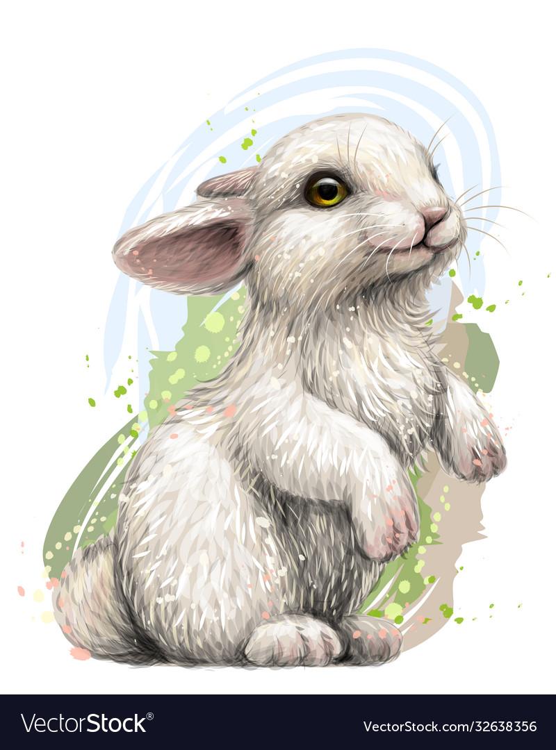 Rabbit color artistic graphic image a rabbit