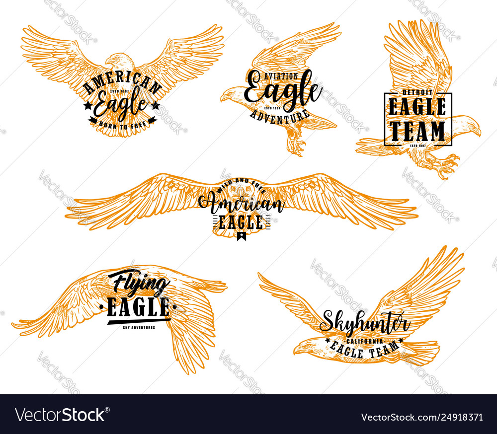 Eagle hawk or falcon birds with letterings