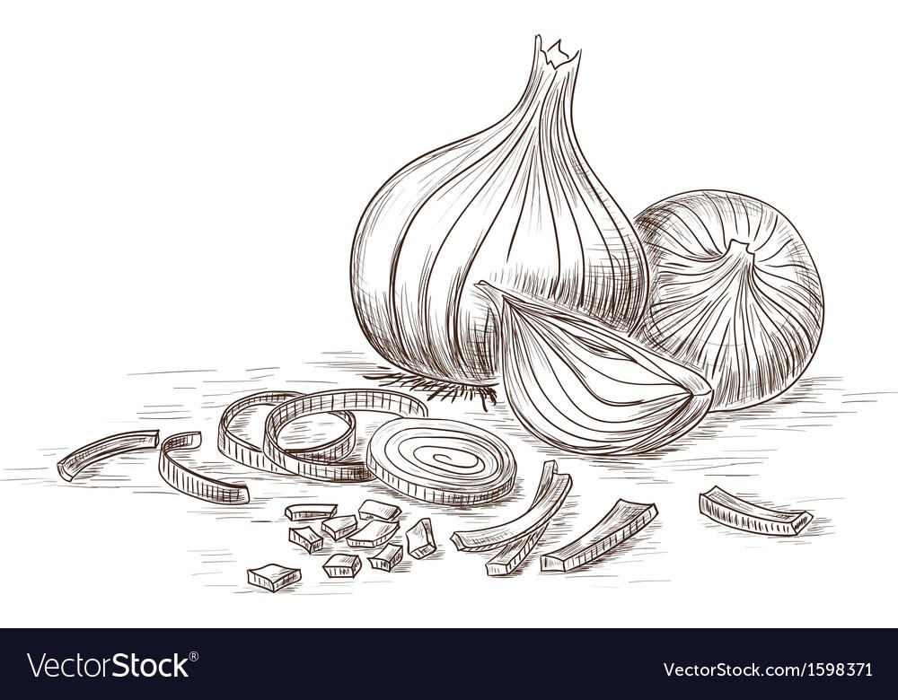 Hand drawn onions