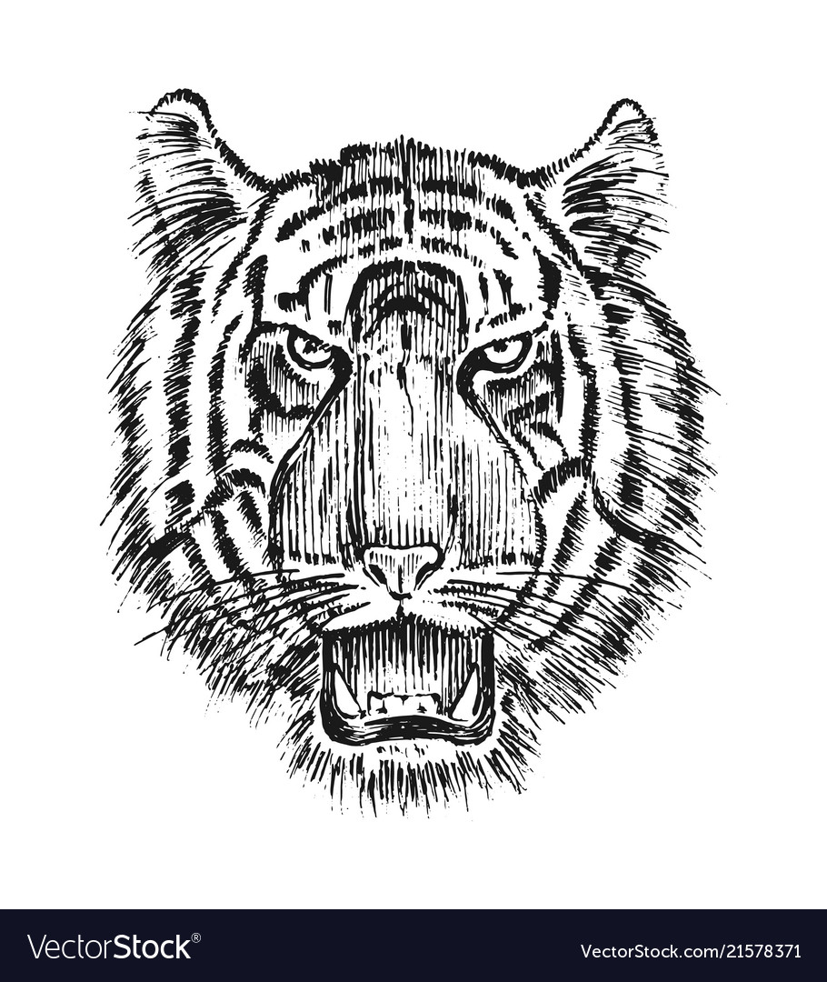 Japanese wild tiger asian animal cat profile of