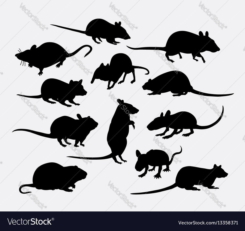 Mouse and rat mammal animal silhouette vector image