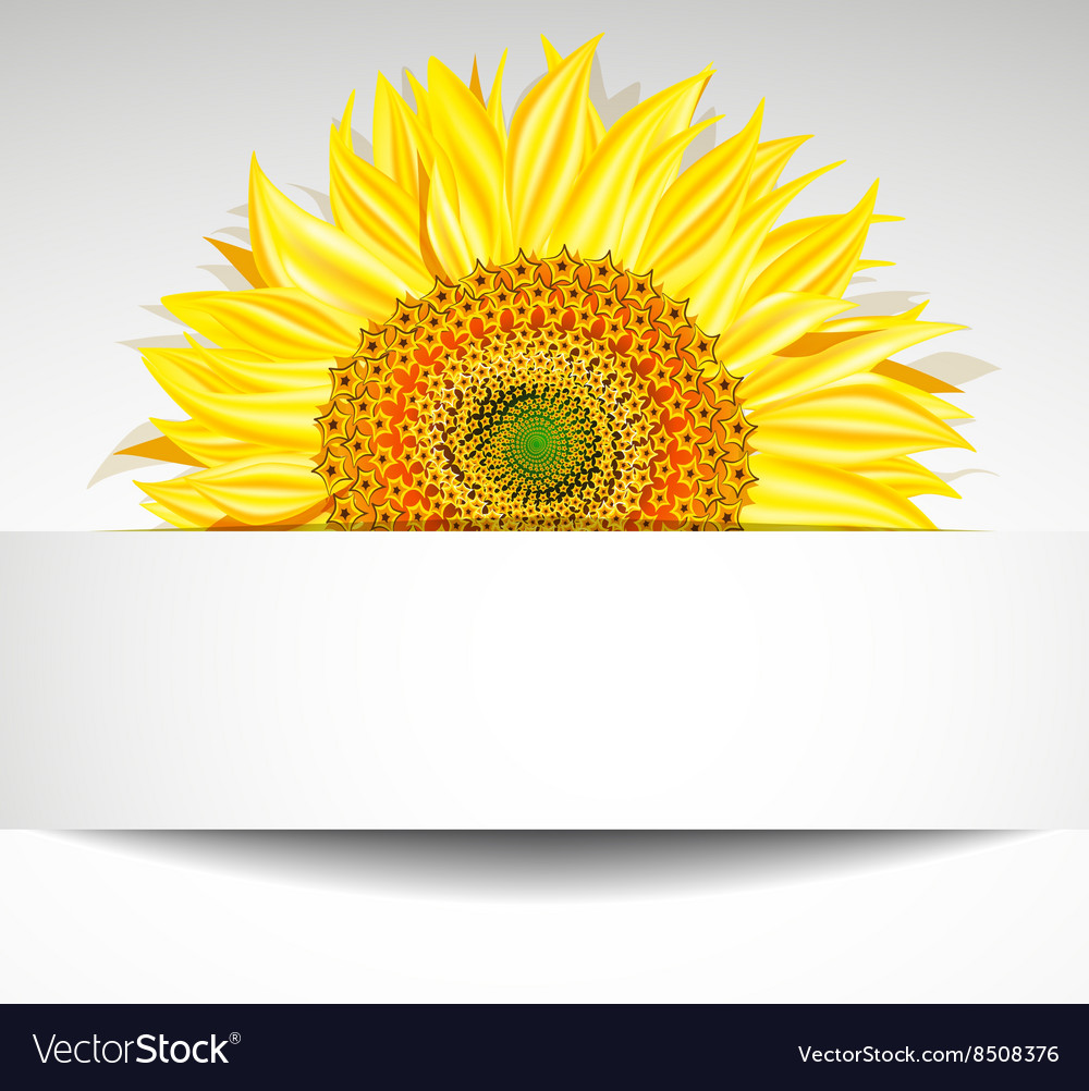 Sunflower Banner Design