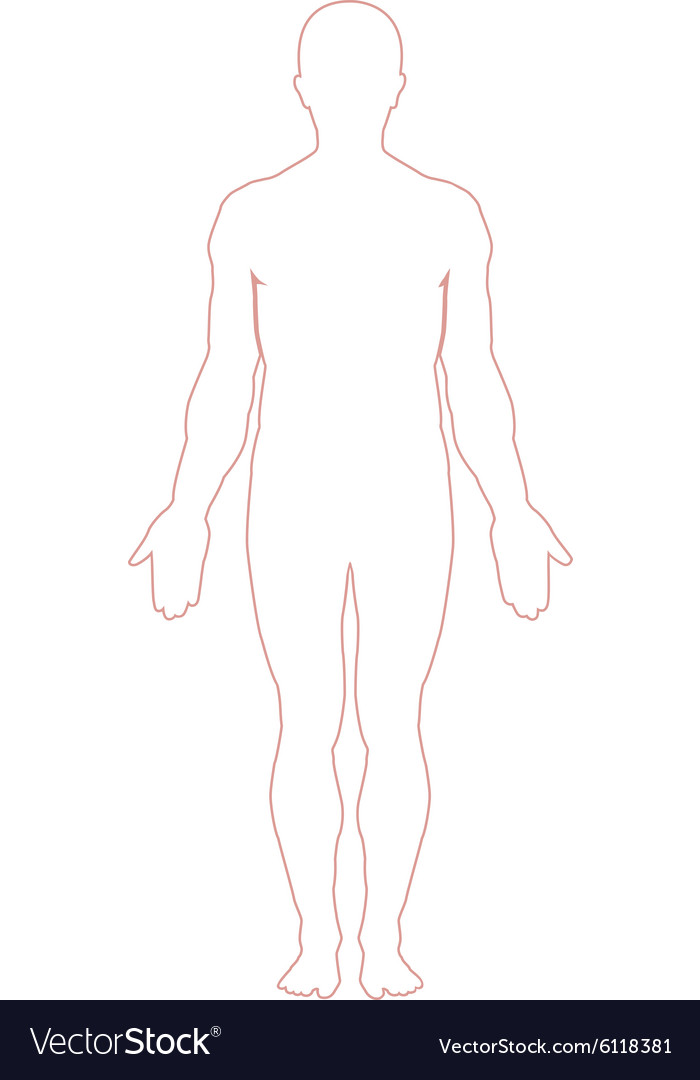 Man body outline vector image