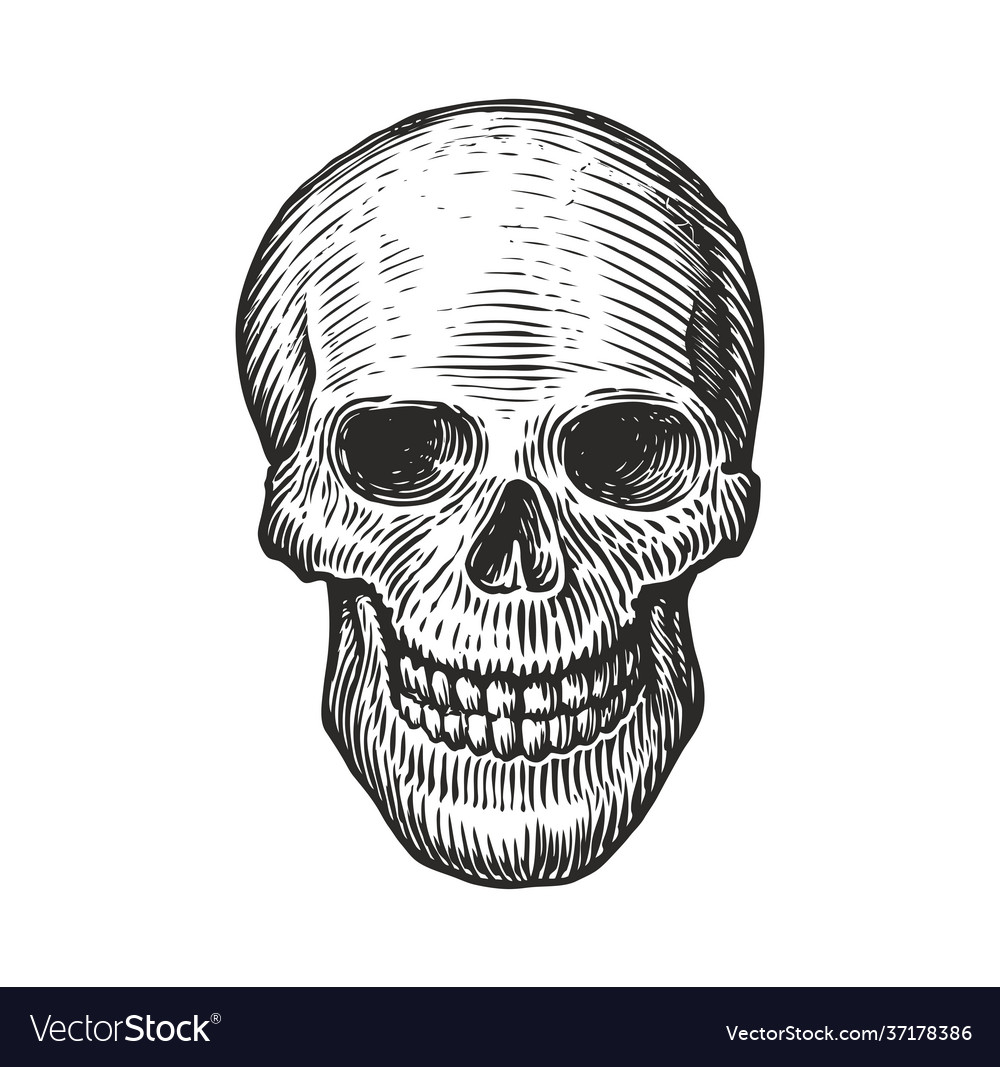 Human skull in vintage gothic style engraving