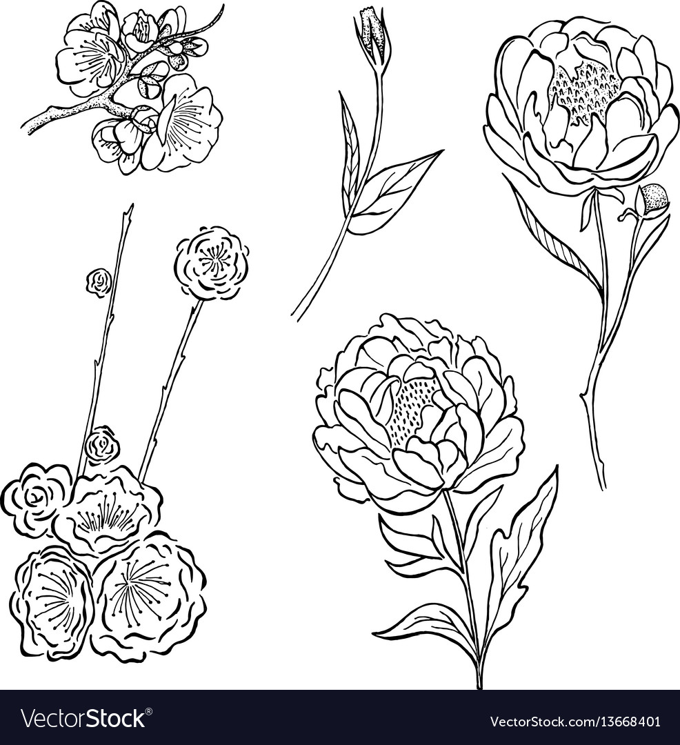 Collection of hand drawn peony and rose