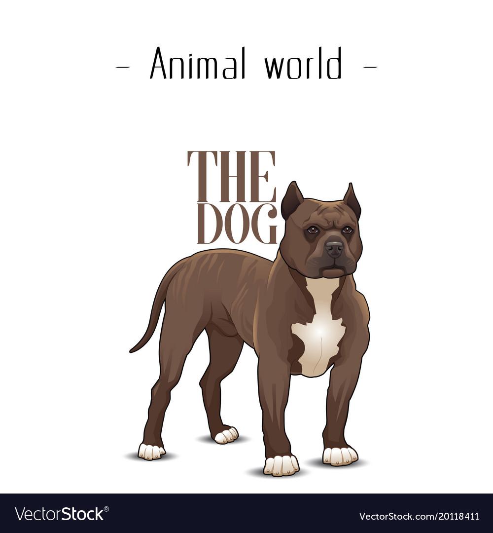 Animal world the dog pit bull terrier background v