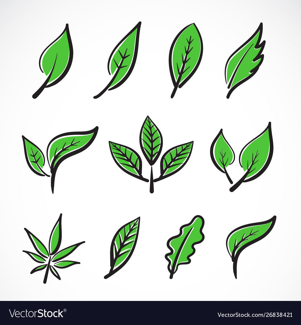 Leaves icon set on white backgroundcollection of