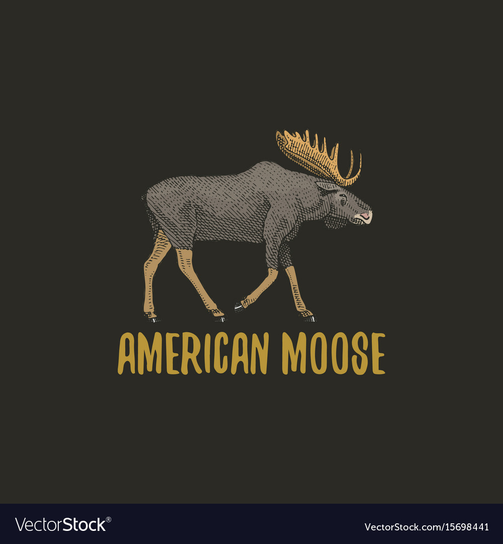 American moose or eurasian elk engraved hand drawn