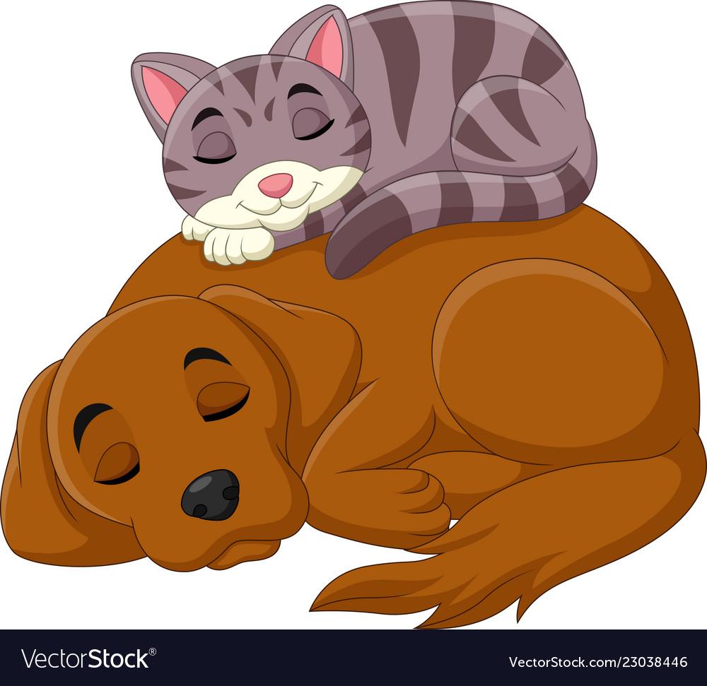 Cartoon cat and dog sleeping vector image
