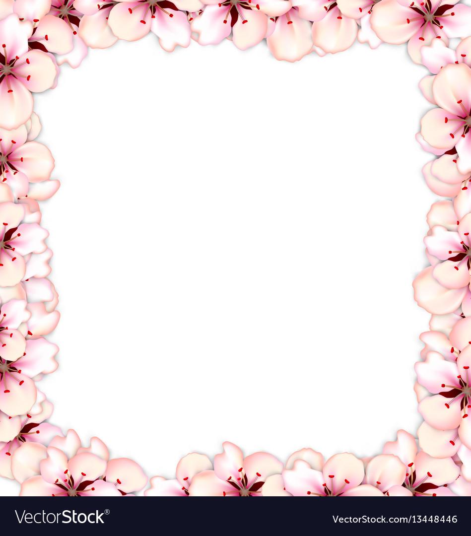 Frame restangle blossoming sakura or cherry red