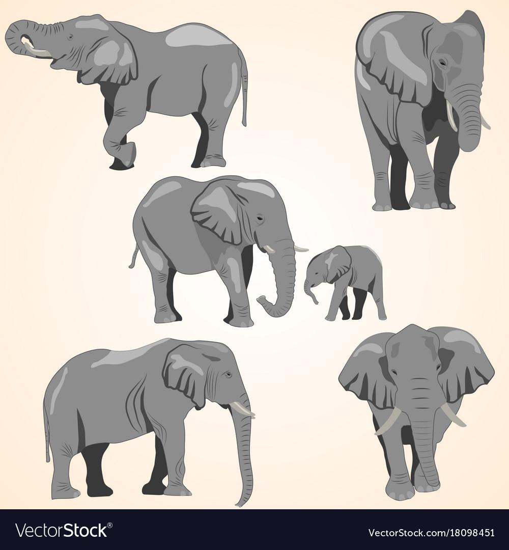 A set of african elephants
