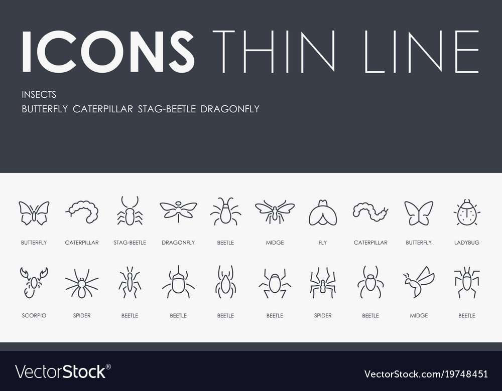 Insects thin line icons vector image