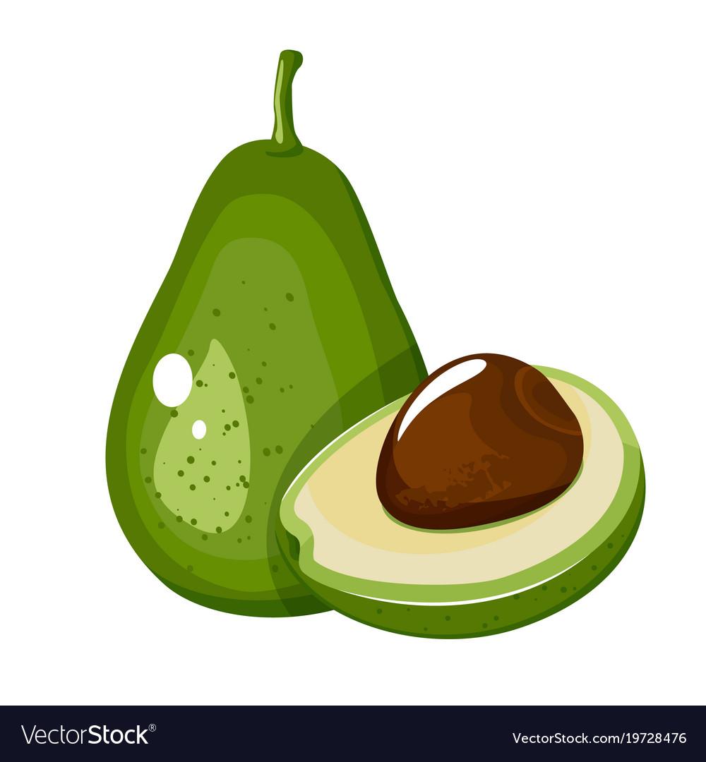 Avocado fruit cartoon icon isolated on white Vector Image