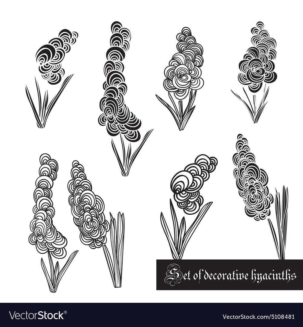 Set of decorative elements hyacinth and leaves vector image
