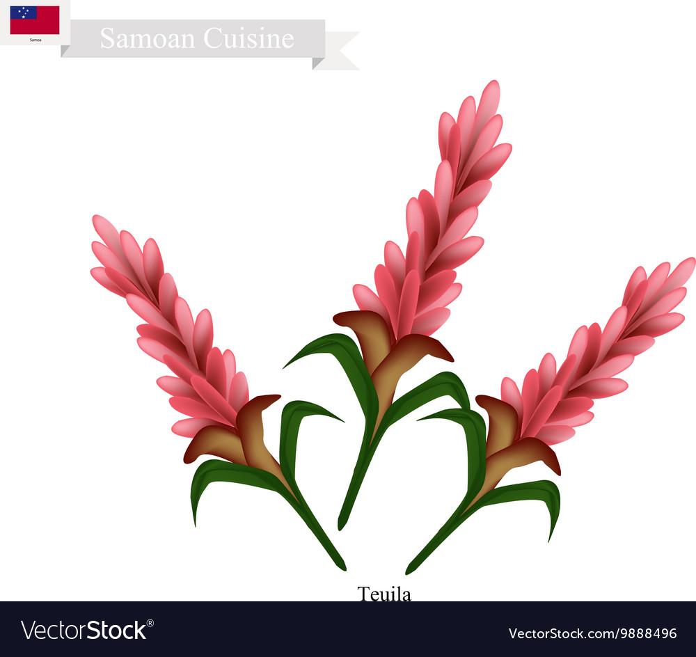 Teuila Flower The National Flower of Samoa vector image