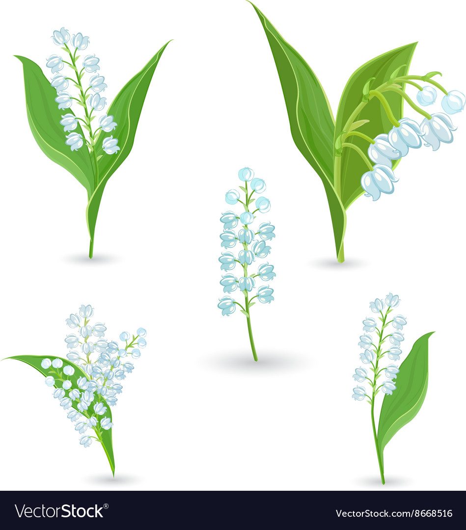 Cute collection of Lilies Of The Valley for your Vector Image