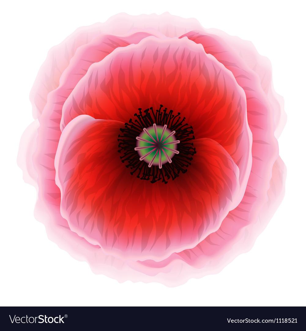 Red Poppy Flower Royalty Free Vector Image Vectorstock