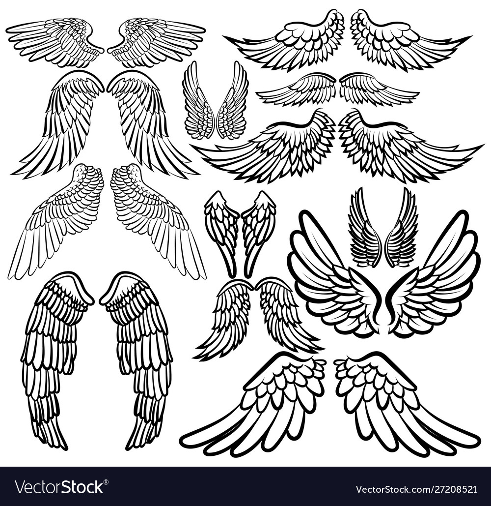 Set angel wings wings collection with feathers