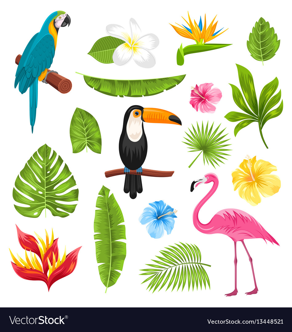 Set tropical flowers exotic birds and plants