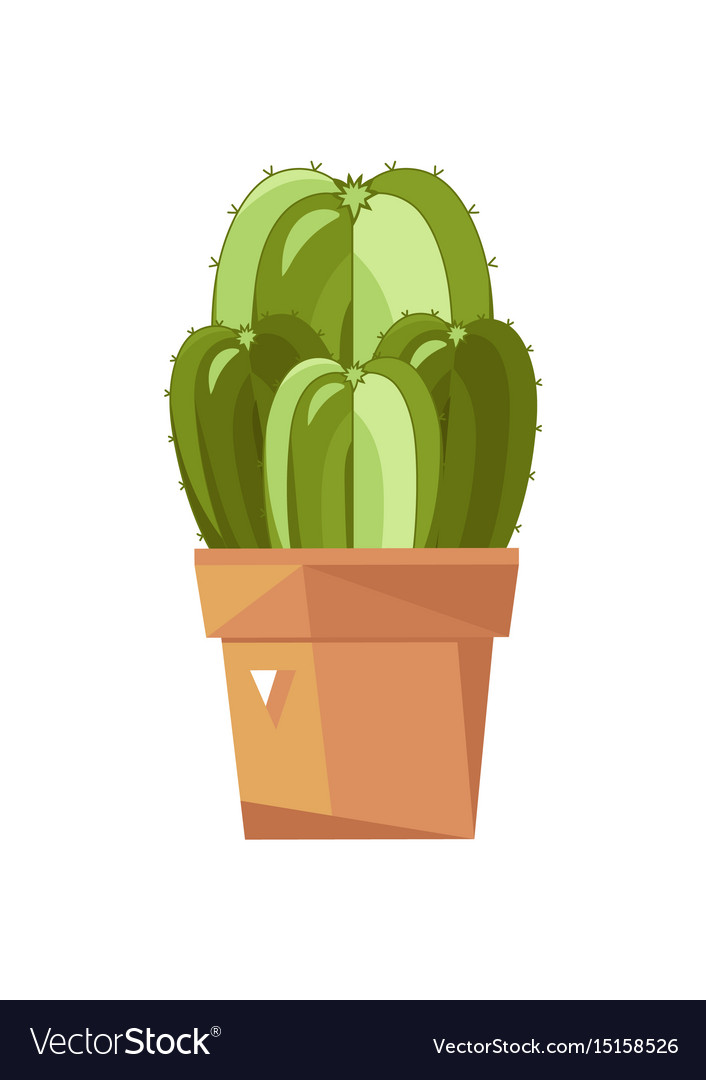 Cactus plant in pot isolated icon vector image
