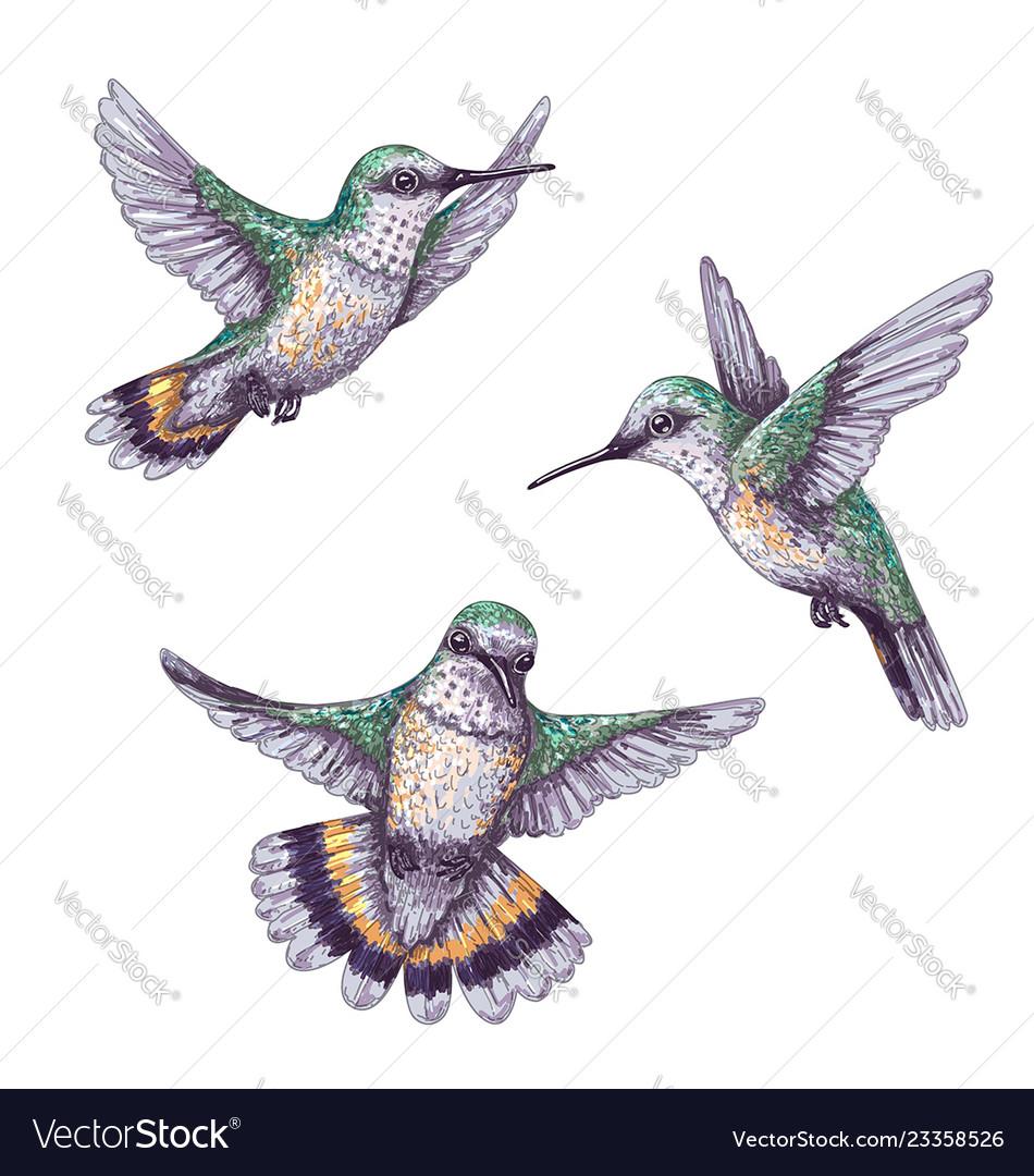 Flying humming birds sketch